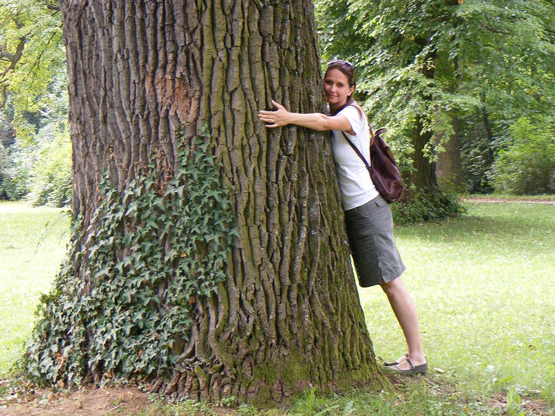 Mágikus fák-tisztaforrás
